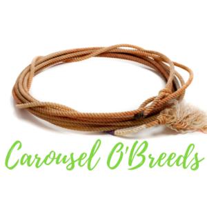 Carousel O Breeds