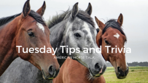 Tuesday Tips and Trivia